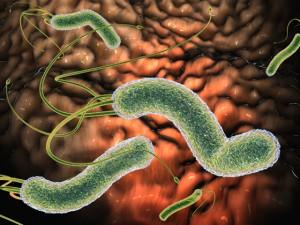 Нормальная микрофлора кишечника