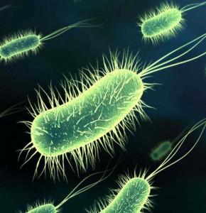 Дружественные бактерии организма человека