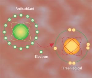 Действие антиоксиданта