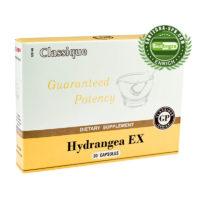 Hydrangea EX (Гортензия)